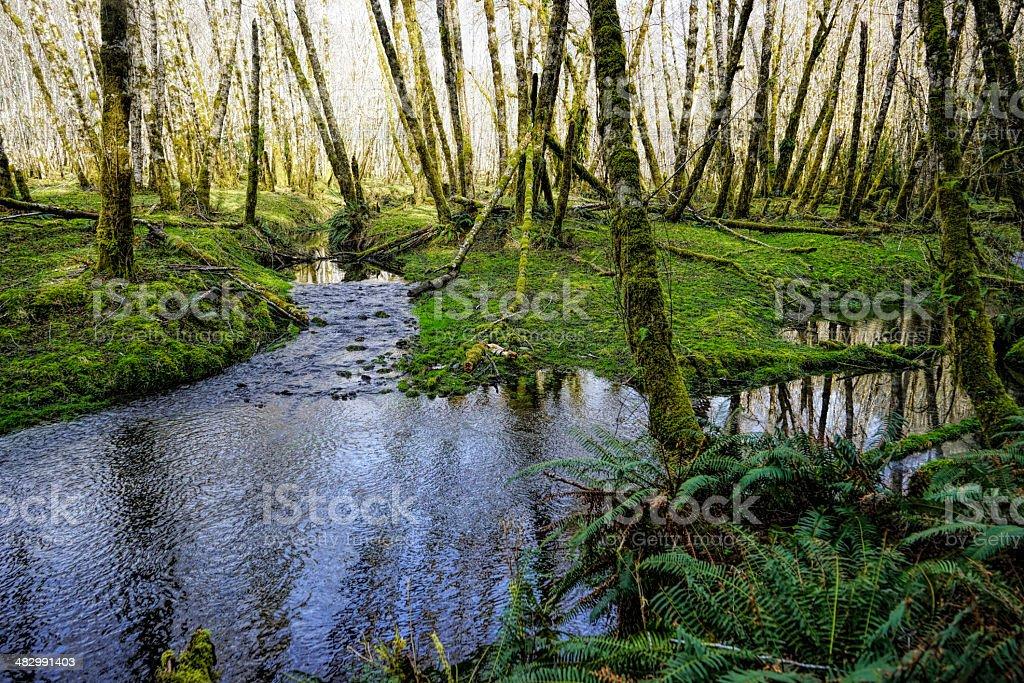 streams and green royalty-free stock photo