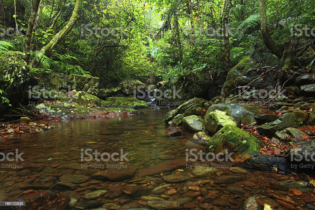 streams in the primeval forest stock photo