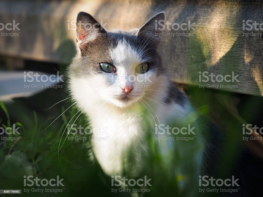 street alley cat with different eyes. Portrait stock photo