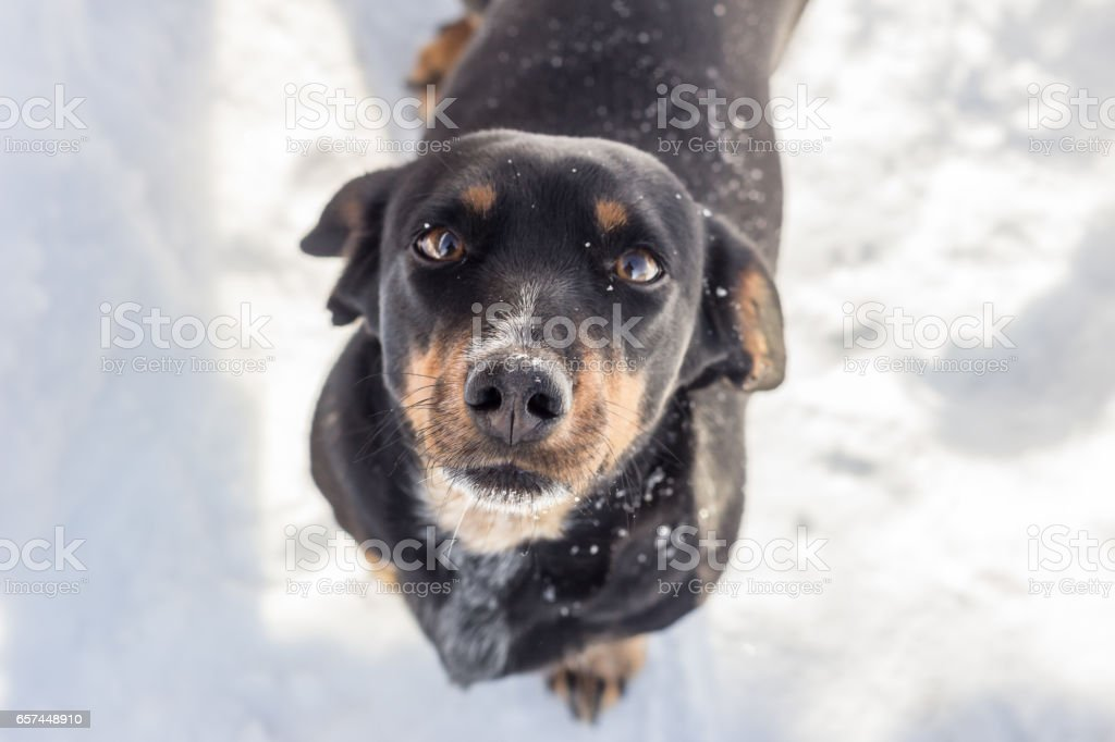 A street black dog stock photo