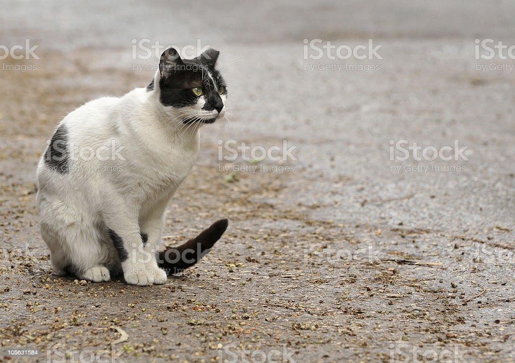 Street cat royalty-free stock photo