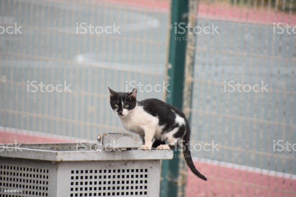 Street cat stock photo