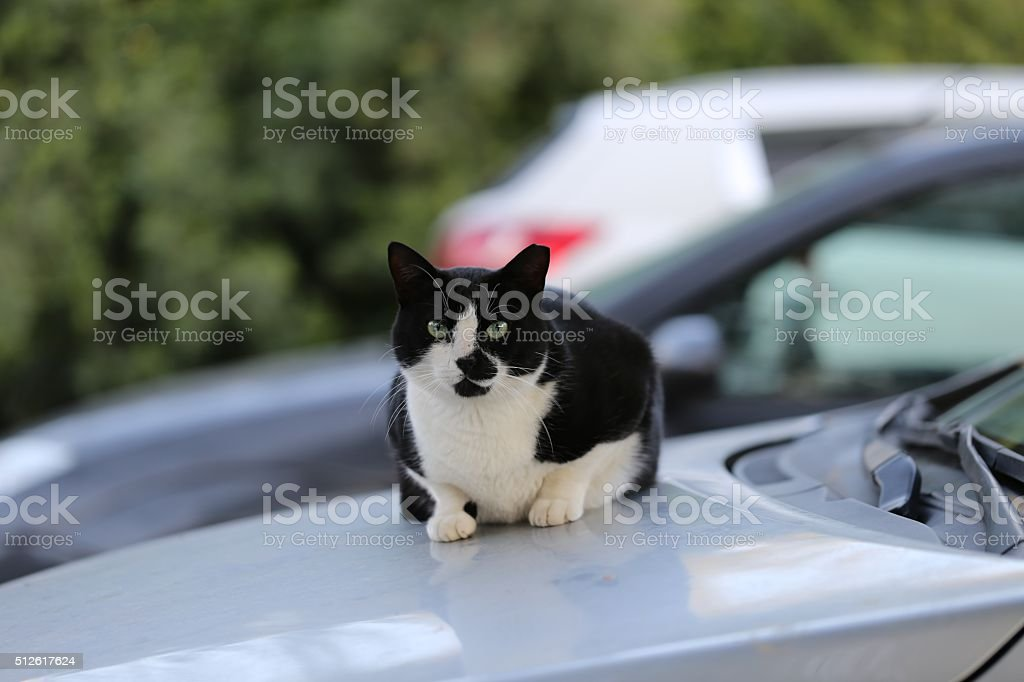 Street Cat Sitting on a Car stock photo