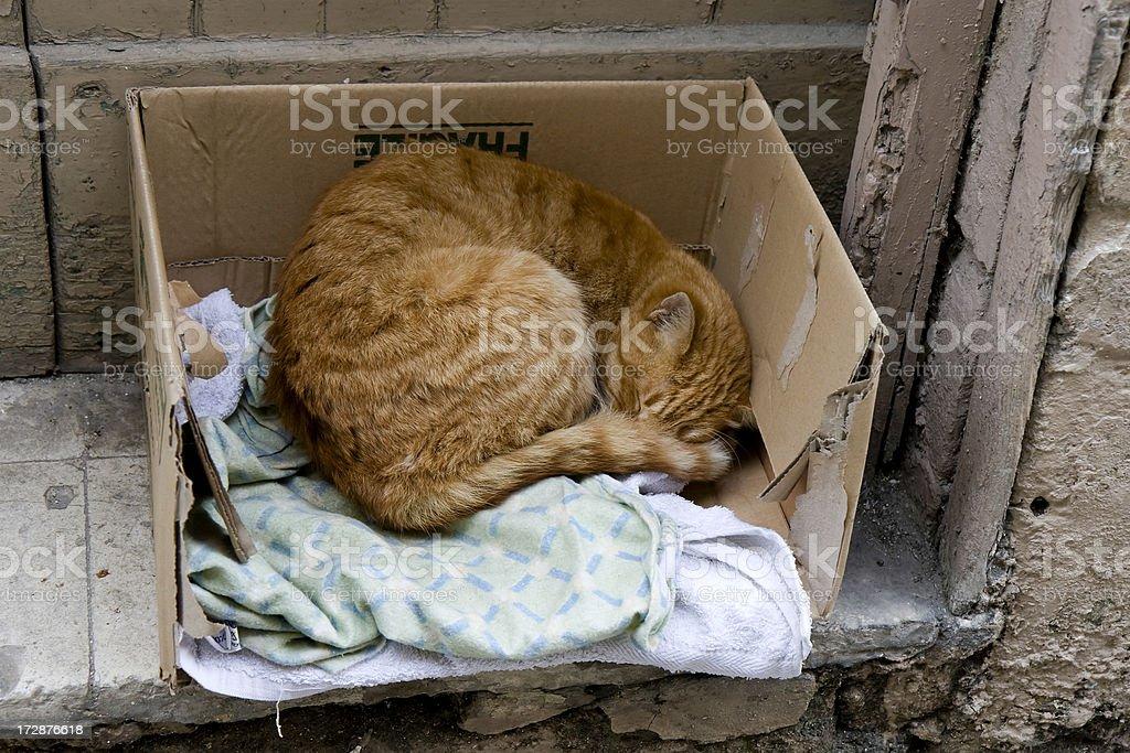 Street cat sleeping stock photo