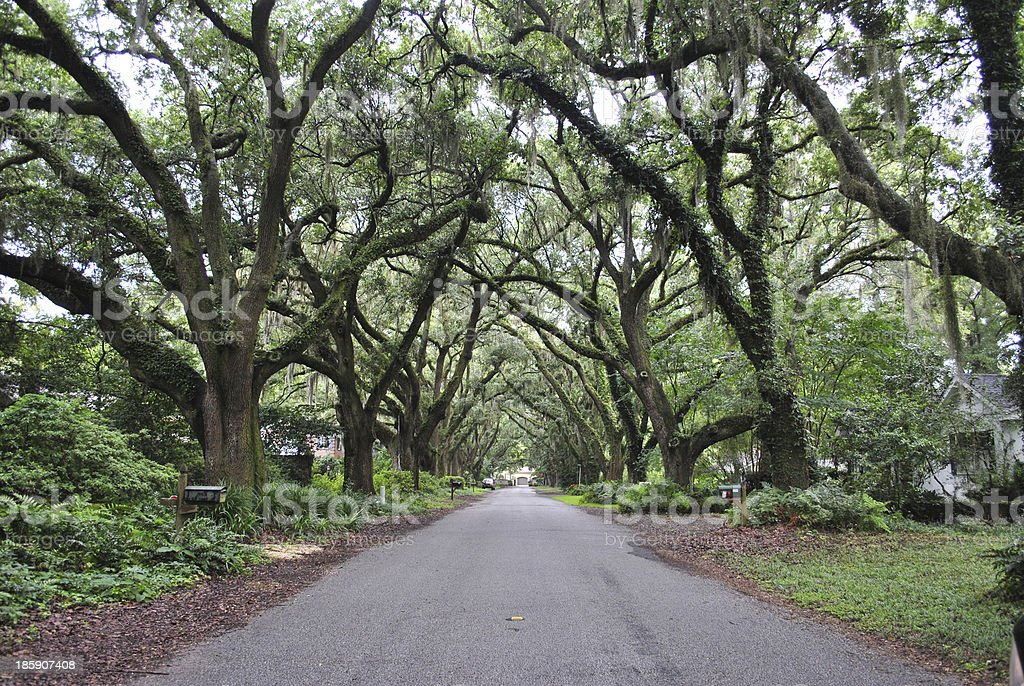 Street covered with trees royalty-free stock photo