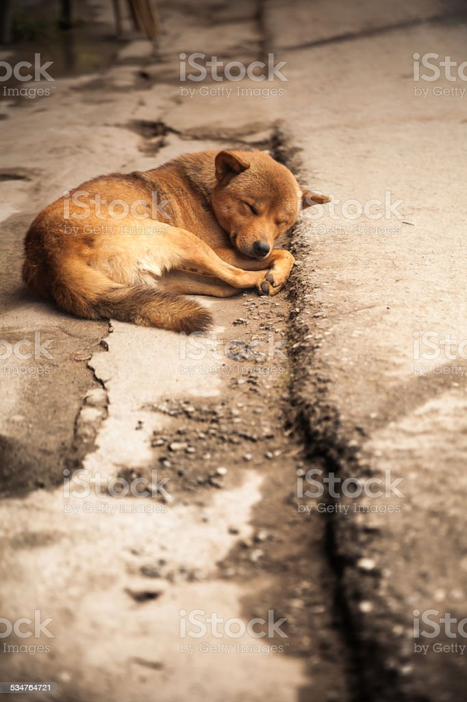 Street Dog Sleeping On The Road Thailand South East Asia stock photo