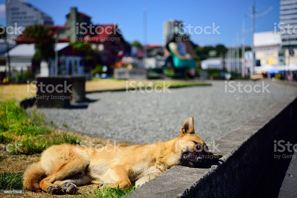 Street dogs always find a place to sleep stock photo