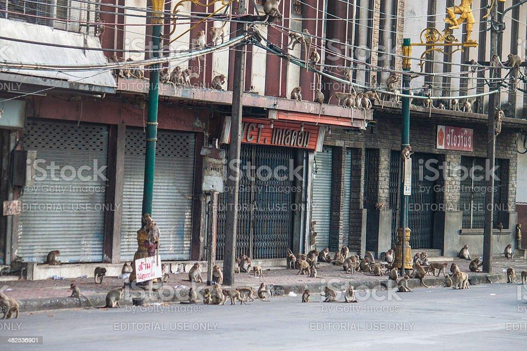 Street full of monkeys stock photo