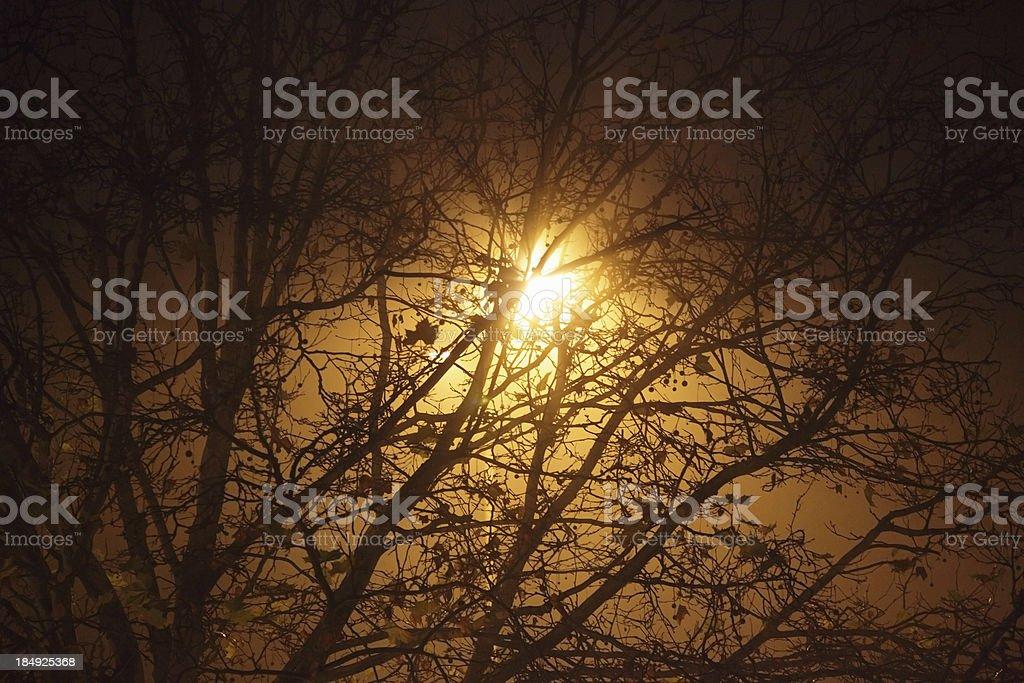 Street light behind tree stock photo