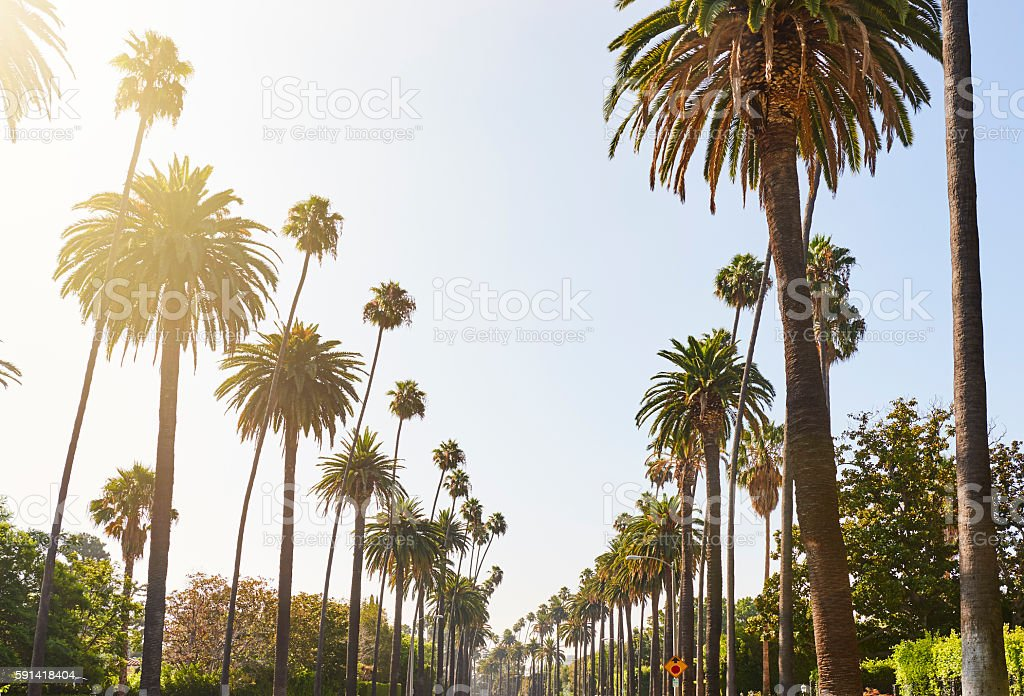 Street lined with palm trees stock photo