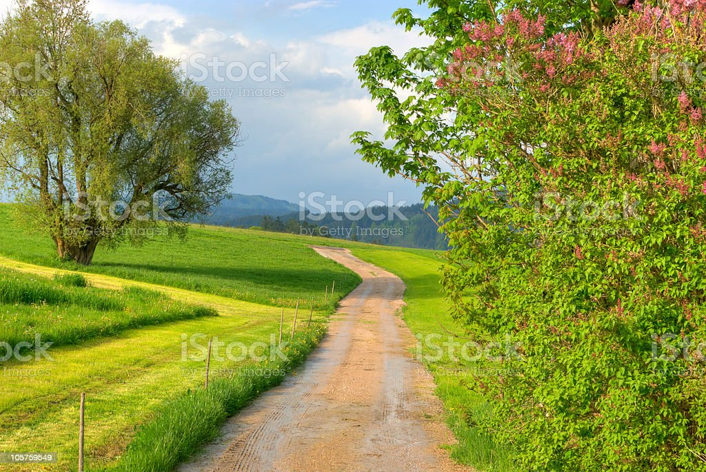 Street through the fields stock photo