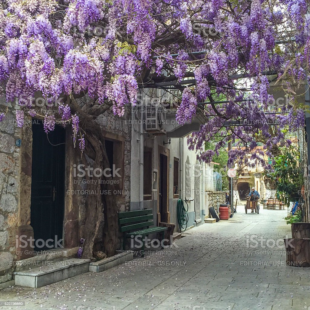 street with beautiful purple flowers in Chios Island in Greece. stock photo