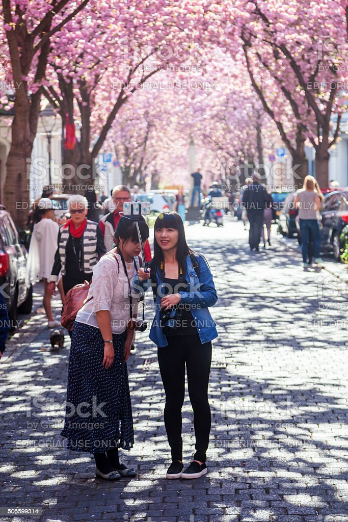 street with cherry trees in Bonn, Germany stock photo