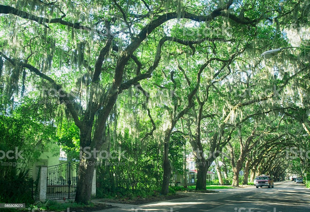 Street with live oaks in St. Augustine, Florida stock photo