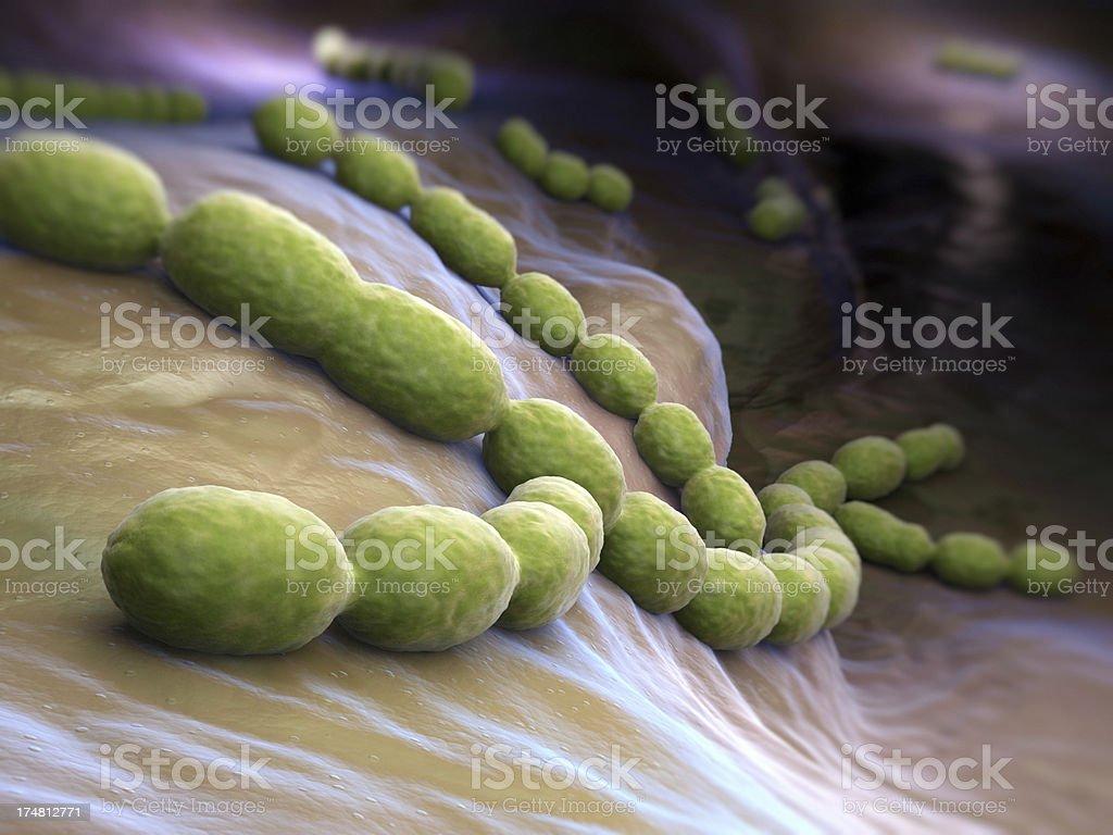 Streptococcus pneumoniae stock photo