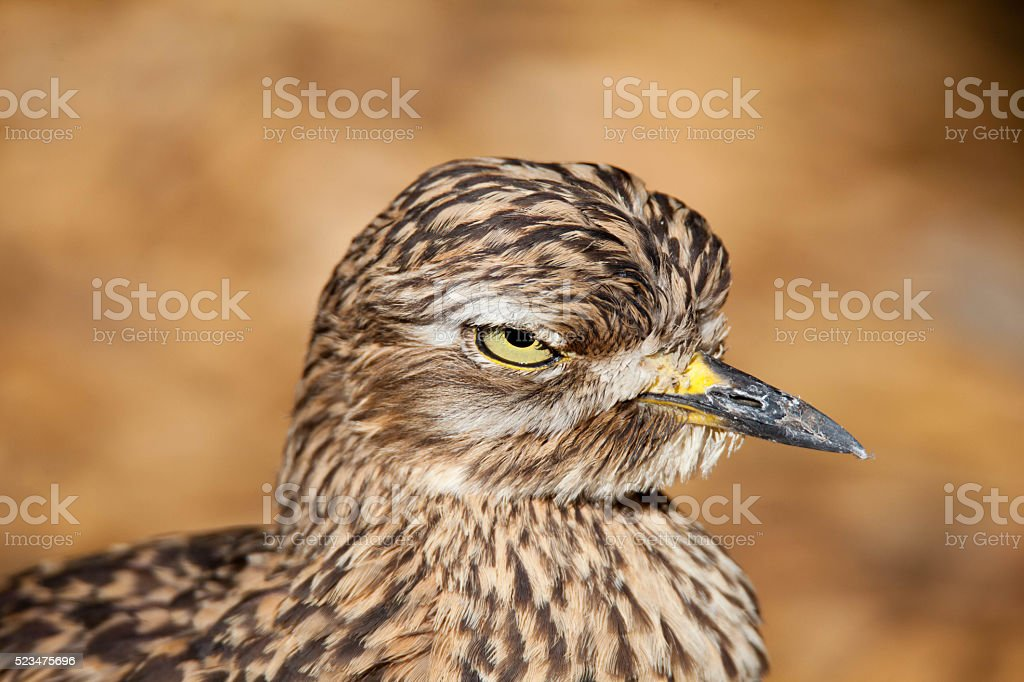 Strict Bird stock photo
