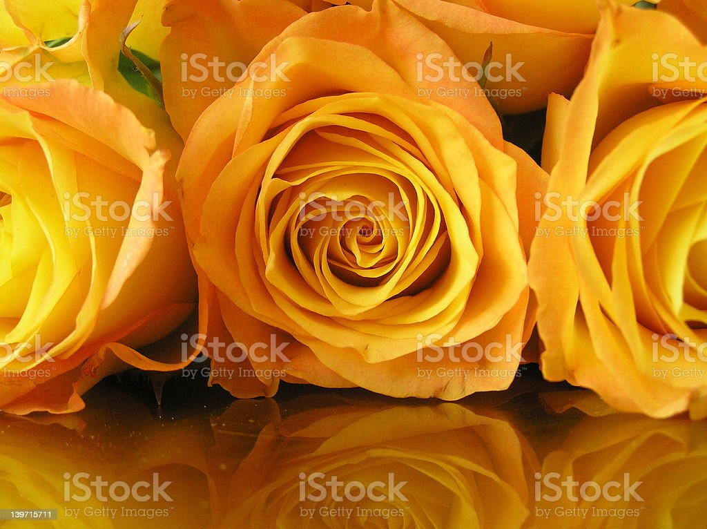 strictly gold royalty-free stock photo