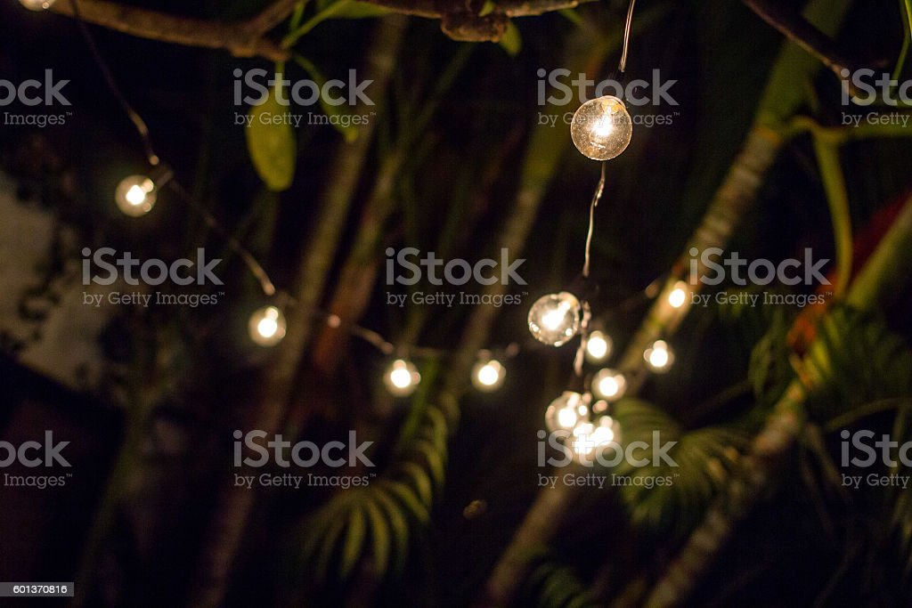 String lights on tree stock photo