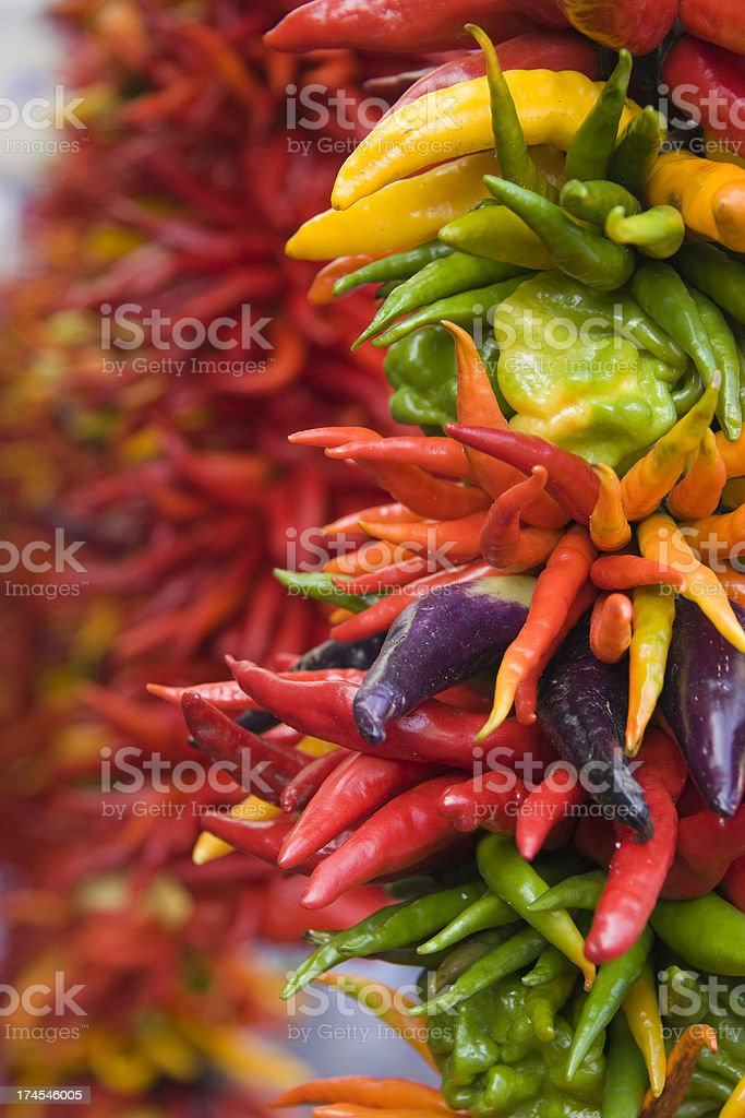 String of multi colored peppers royalty-free stock photo