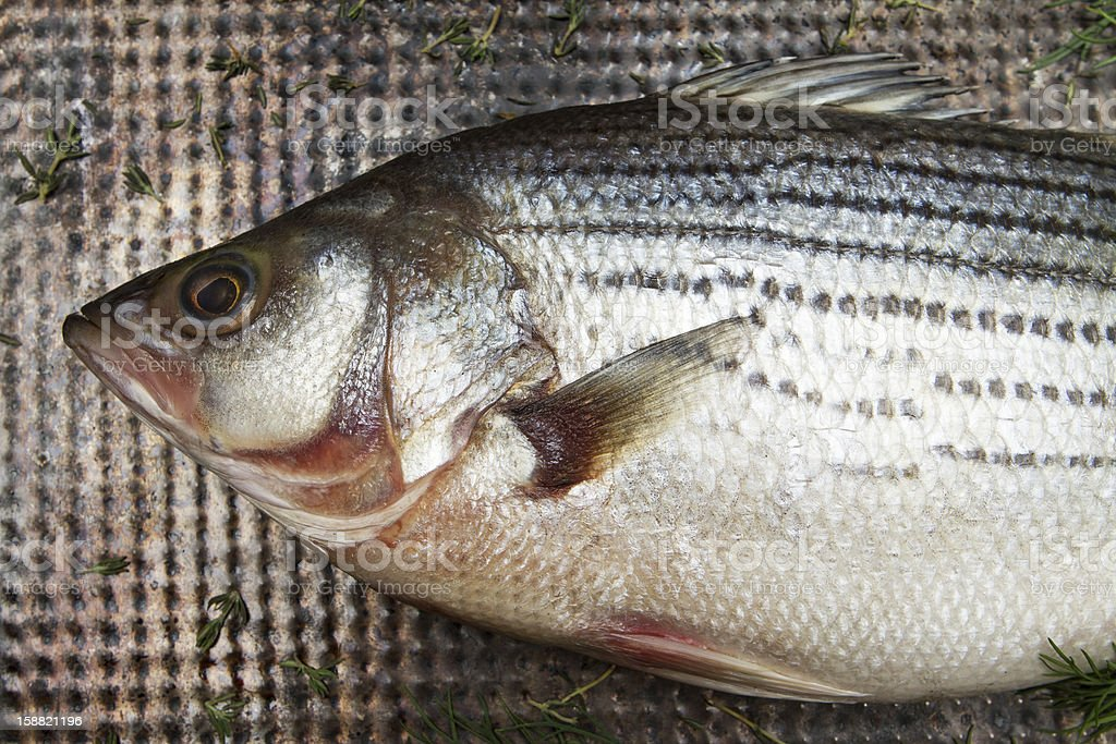 Striped bass with herbs royalty-free stock photo
