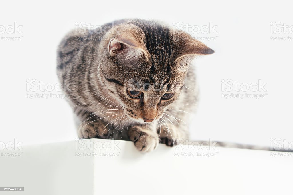 Striped cat sits on table and looking down stock photo