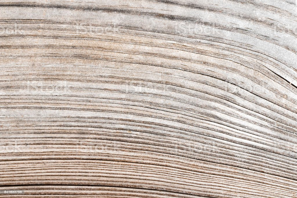 Striped macro abstract natural texture from hardwood material full frame background stock photo
