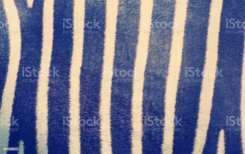 striped zebra skin pattern stock photo