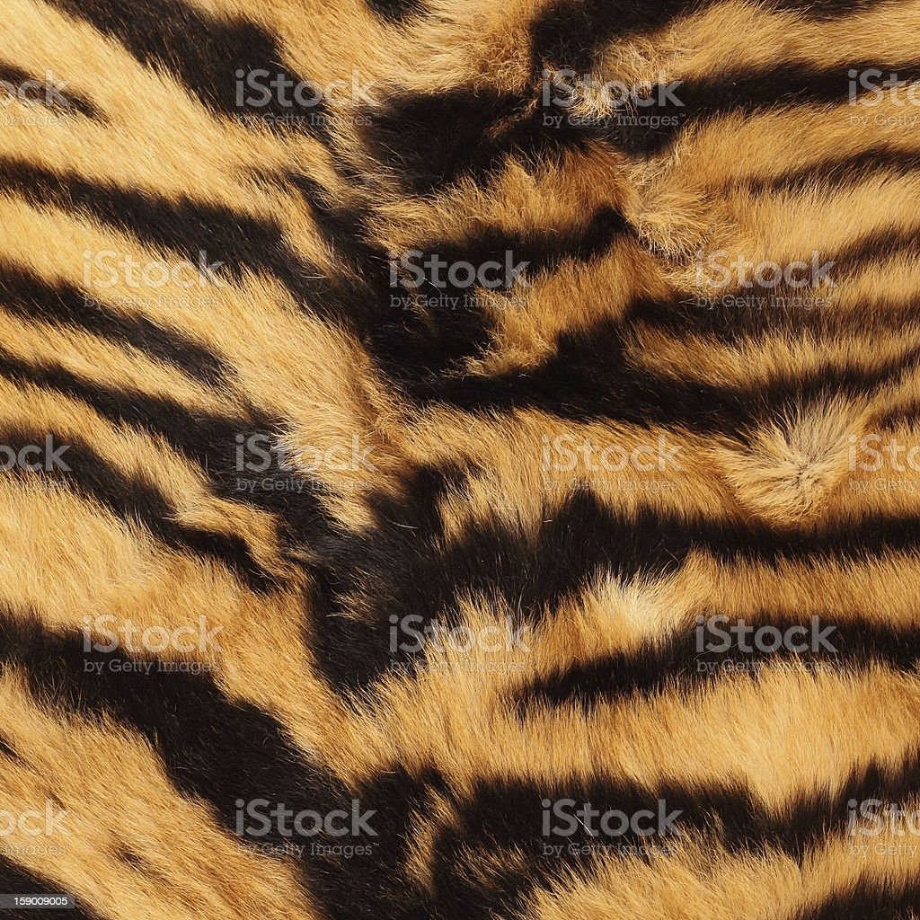 stripes on a tiger pelt royalty-free stock photo