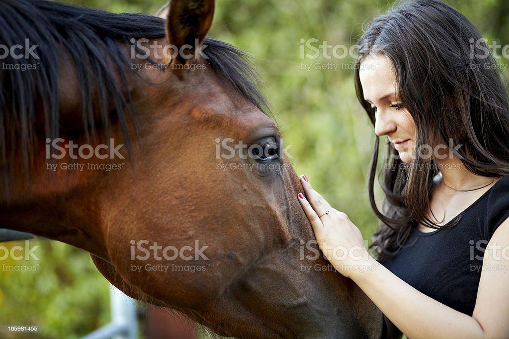 Stroking a horse stock photo