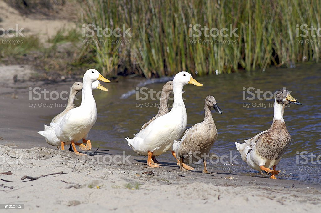Stroll down the beach royalty-free stock photo