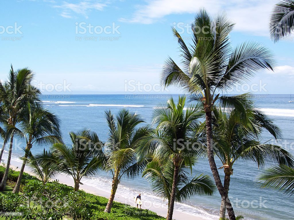 Strolling Surfer on Palm Tree Lined Hawaiian Beach royalty-free stock photo
