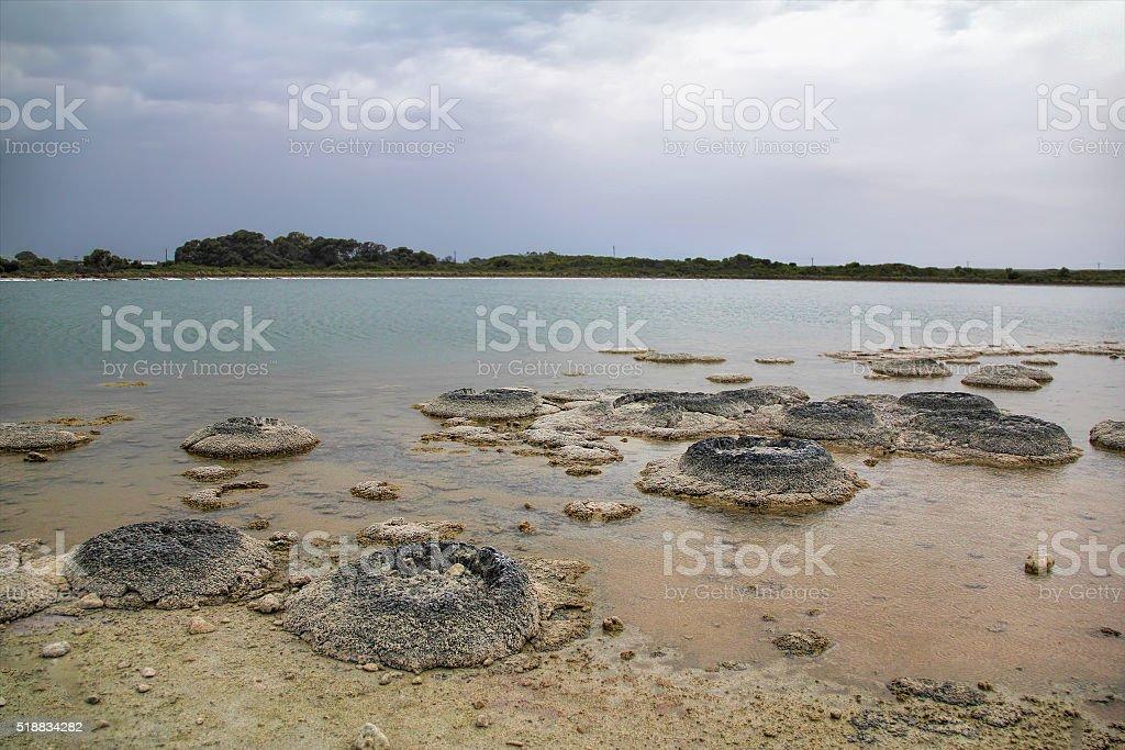 Stromatolite at Lake Thetis, Western Australia stock photo