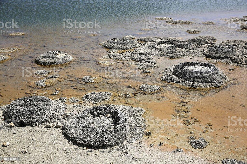 Stromatolite XXXL stock photo