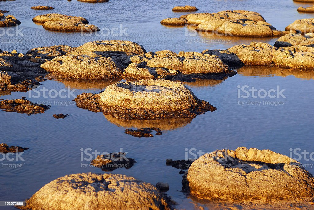 Stromatolites at Lake Thetis, Western Australia. stock photo