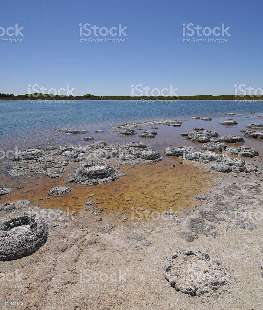 Stromatolites at Lake Thetis, Western Australia stock photo
