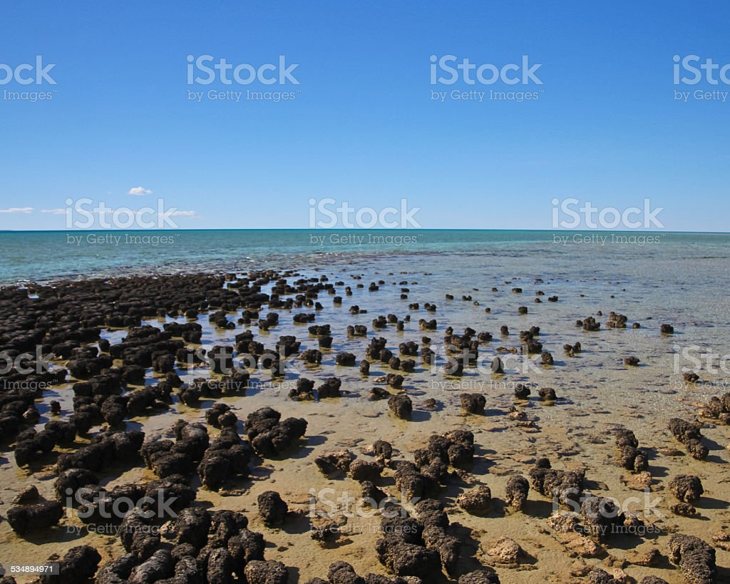 Stromatolites at Shark Bay stock photo