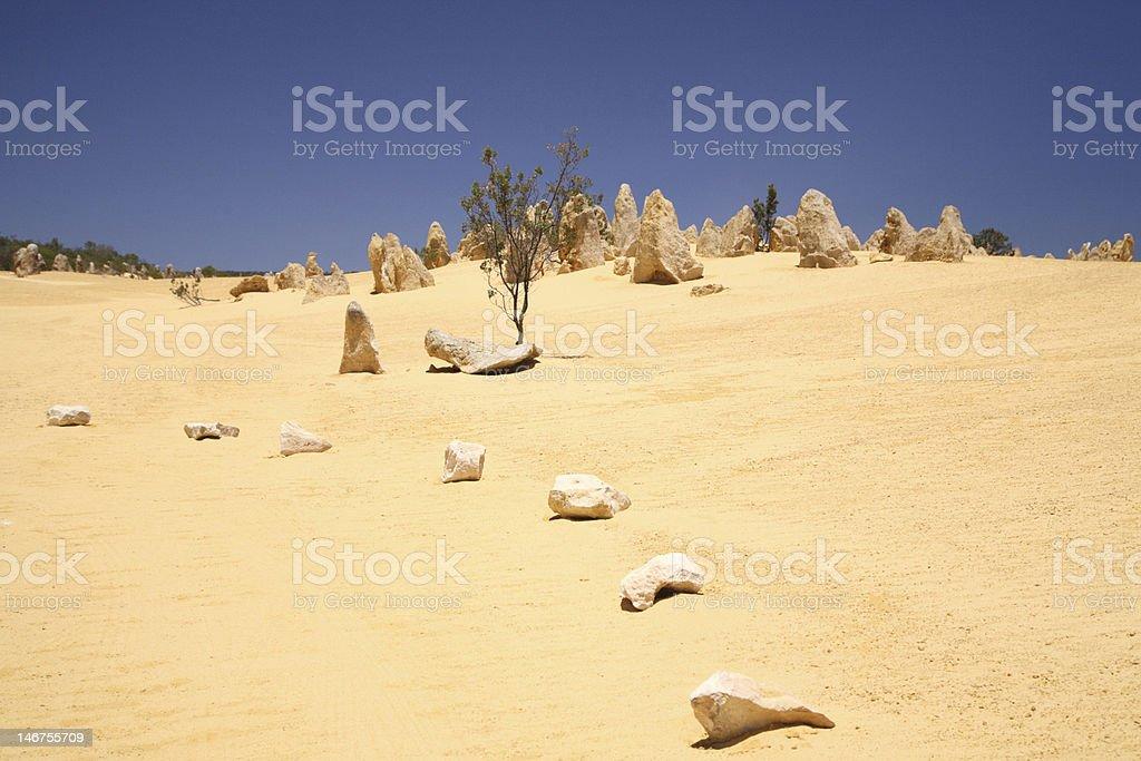 Stromatolites in Western Australia stock photo