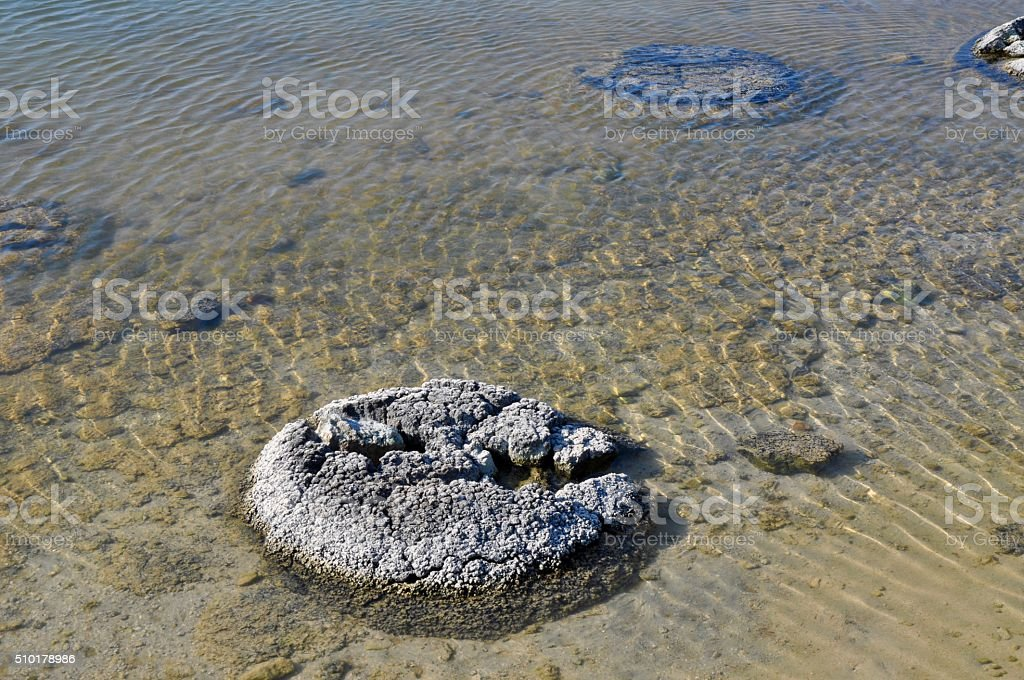 Stromatolites: Living Fossils at Lake Thetis stock photo