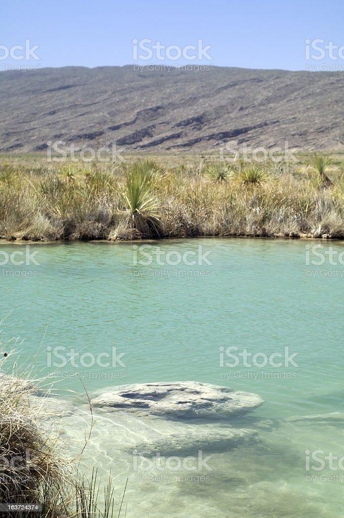 Stromatolites stock photo