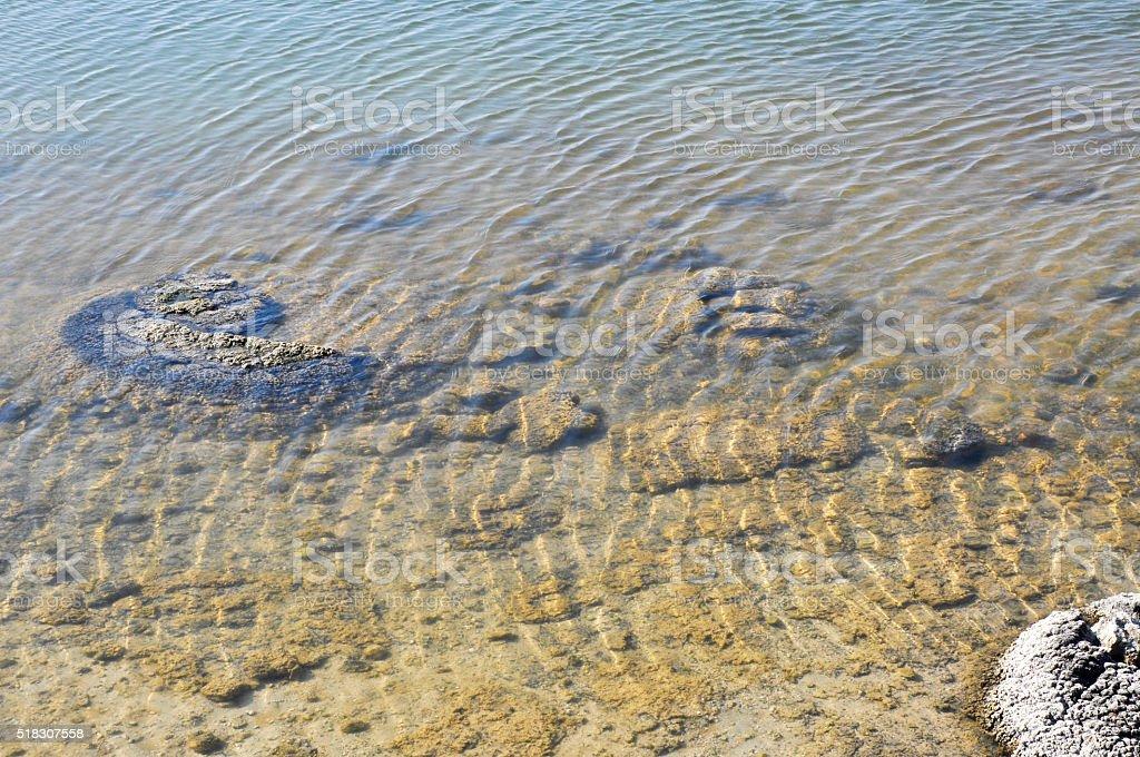 Stromatolites: Rare Living Fossil stock photo