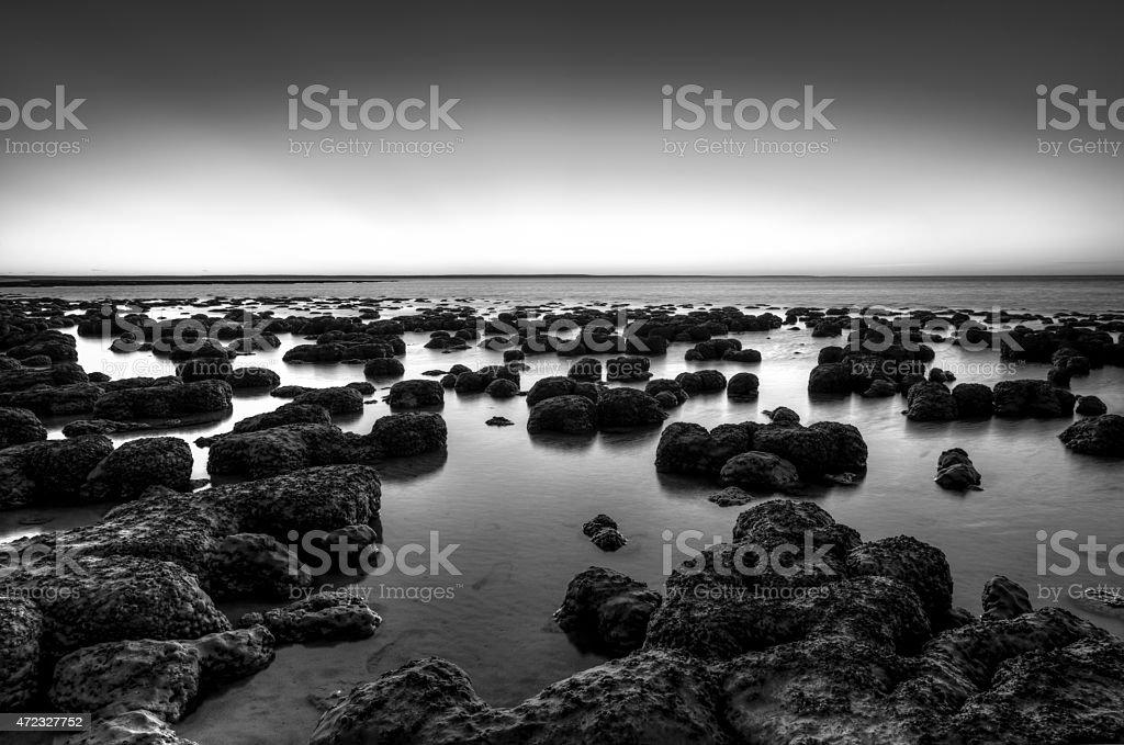 Stromatolites Sharks Bay stock photo