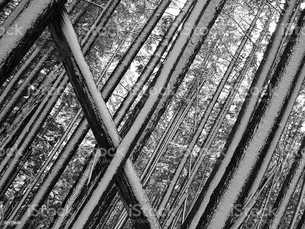 Strong Linear Pattern In The Forest royalty-free stock photo