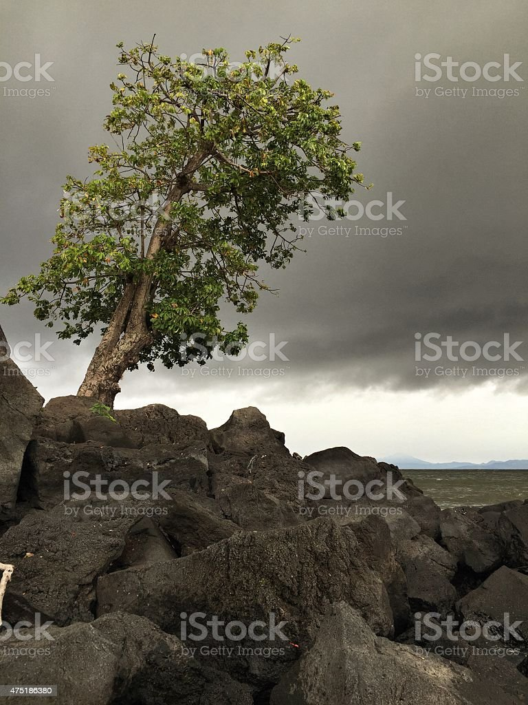Strong Old Tree stock photo
