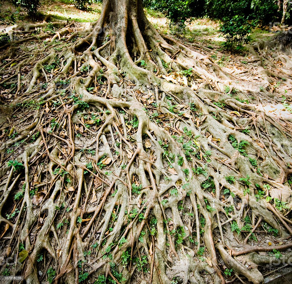 Strong Root Background stock photo