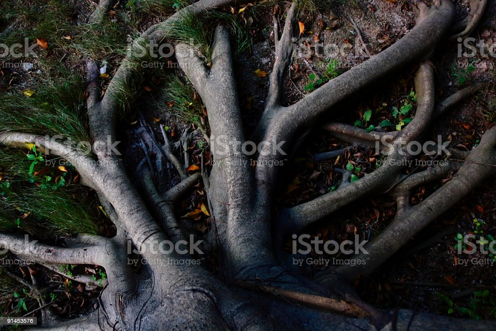 strong tree roots stock photo
