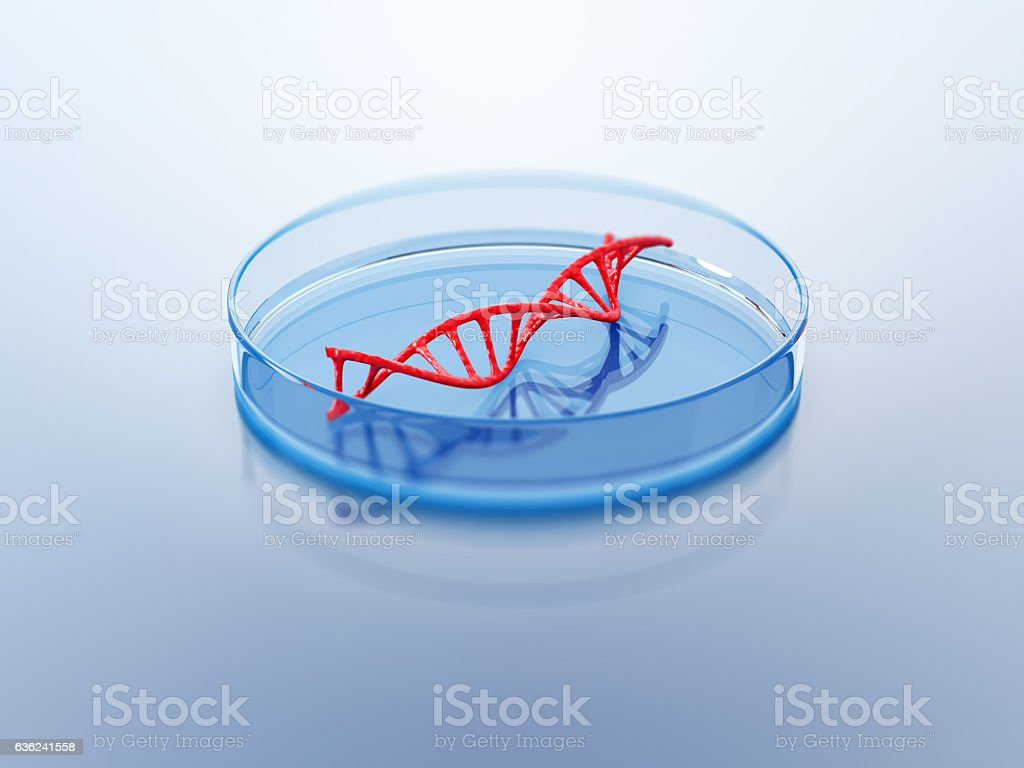 DNA structure in the petri dish. stock photo