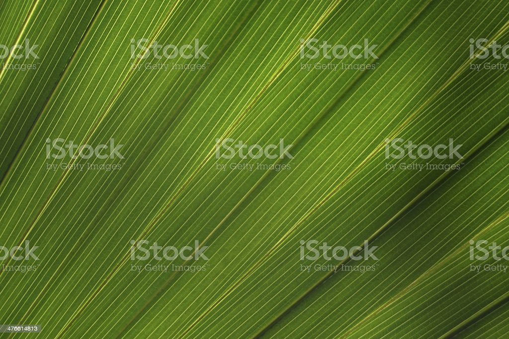 Structure of a palm leaf royalty-free stock photo