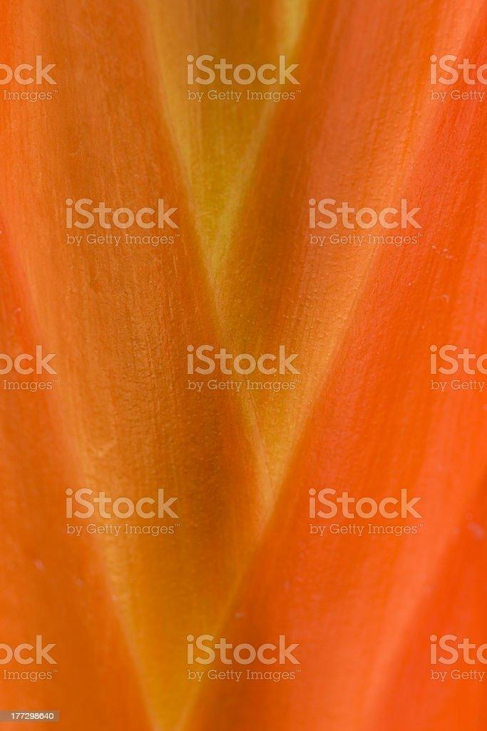 Struktur und Farbe einer Bromelia sp. royalty-free stock photo