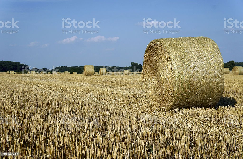 Stubble after harvest royalty-free stock photo