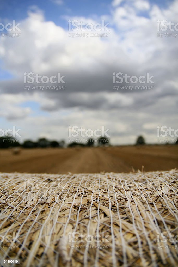Stubble field.... royalty-free stock photo